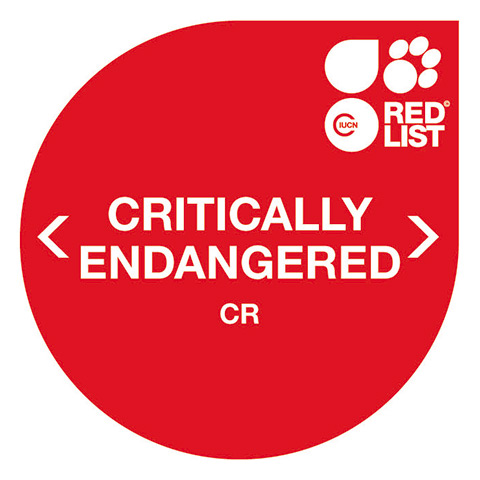 Critically Endangered